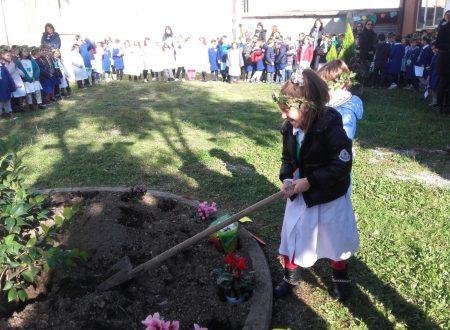 """21 Novembre  2017  """"Festa degli alberi"""""""